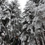 zimna_vitosha_24